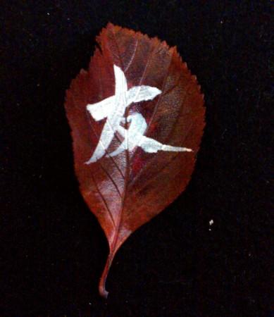 on the leaf 10