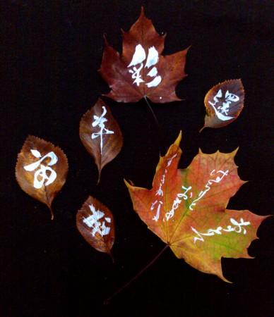 on the leaf 11