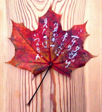 on the leaf 13
