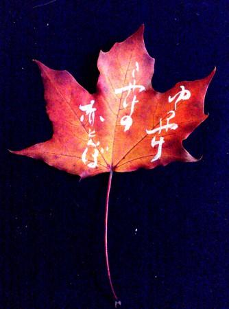 on the leaf 6