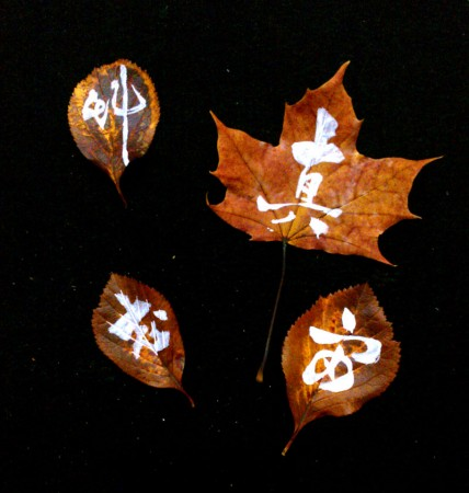 on the leaf 8